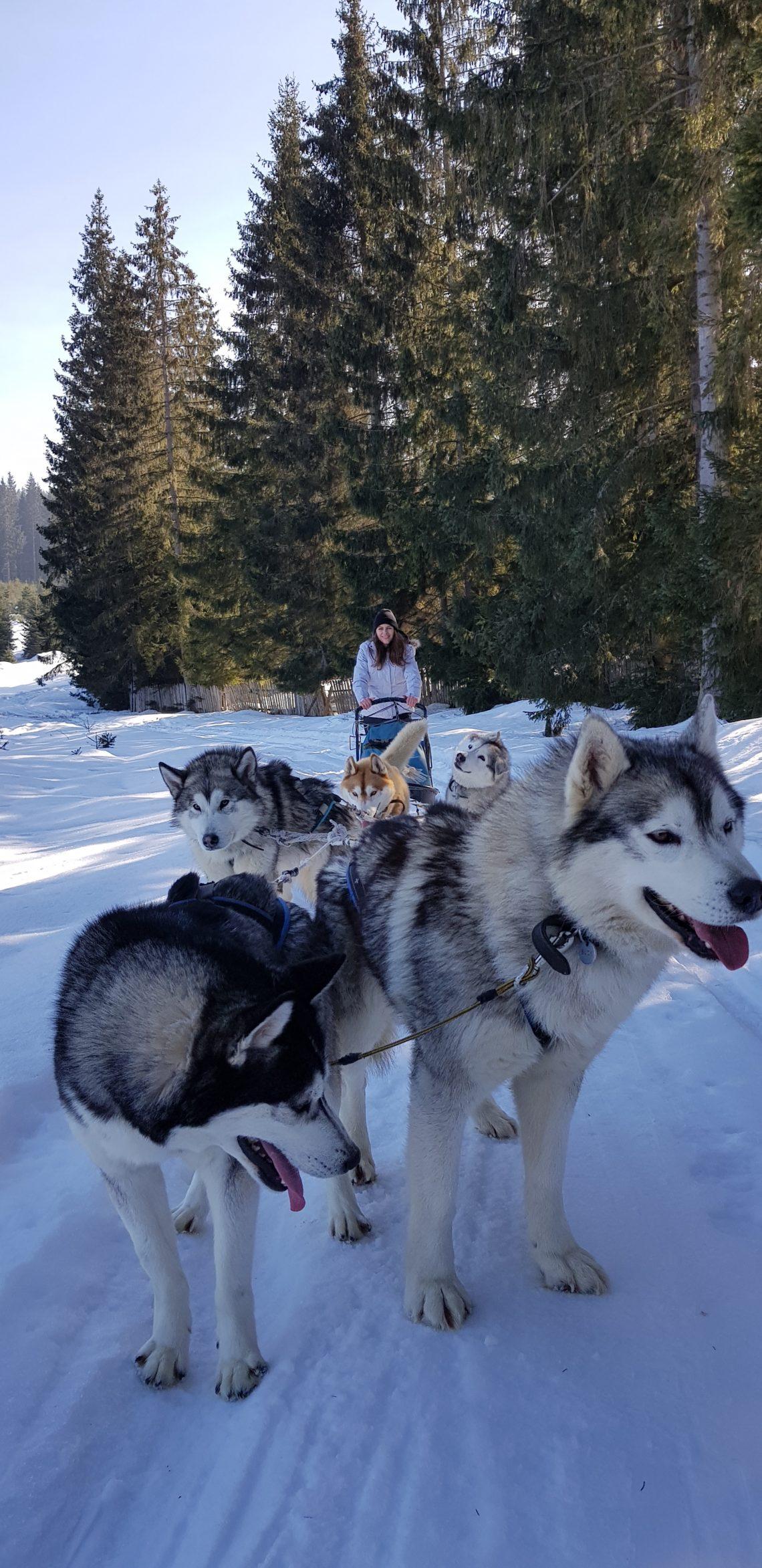 Kutyaszánozás Románia